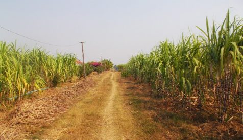 AGRICULTURAL INVESTMENT