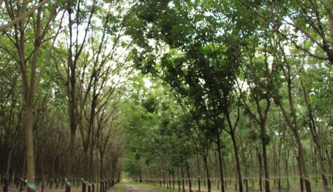 Rubber plantation available for sale Dambae
