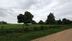 Land For Sale In Koh Dach